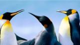 Tučňáci na arše - Divadlo Na Fidlovačce