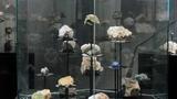 Geologická expozice - Ostravské muzeum