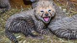 Pražské Zoo se letos podařilo rozmnožit rekordní počet druhů zvířat
