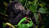 Režiséři Jarmila Štuková a Jan Gregor natočili film Go za Gorilou o výpravě za ohroženými horskými gorilami, který pomáhá popáleným dětem