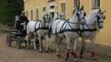 Kladruby: Koně, kam se podíváš!