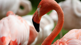 Život v Zoo Liberec se pomalu vrací do obvyklých kolejí