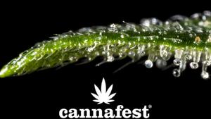 Cannafest Prague – nejrozsáhlejší a zároveň nejvíce mezinárodní veletrh konopí v Evropě