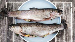 Kurz vaření Sladkovodní ryby