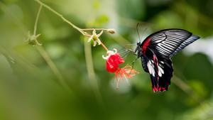 Návštěvníci Botanické zahrady se mohou těšit i na přehlídku Motýli - jedovatá krása