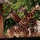 První návštěvníci po znovuotevření v Zoo Liberec