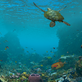 Korálový útes 360 - Planetárium Praha