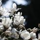 Trojská botanická zahrada se opět otevře veřejnosti