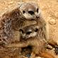 Lidská solidarita i nápady pro Zoo Liberec