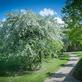 Centrum řemesel a bylinné zahrady Botanicus v Ostré a na co se těšit v červenci