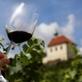 Vinařské akce na vinici sv. Kláry