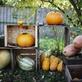V Botanické zahradě Praha se koná Tajuplný dýňový podzim, nebudou chybět Dýňové hrátky ani Halloween