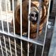 Zoo Děčín: Bruno je tu!