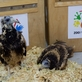 Zoo Praha dopravila do bulharských hor další dva ohrožené supy mrchožravé