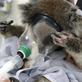 Sbírka Zoo Praha se blíží hranici milionu australských dolarů, první statisíce již odešly do Austrálie
