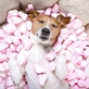 Akce roku pro chovatele zvířat: Jubilejní FOR PETS bude plný novinek i zábavy