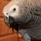 Společnost Laguna - záchranná stanice, která pomáhá papouškům v nouzi