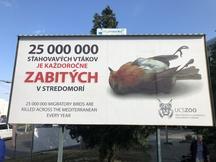 České a slovenské zoo společně proti masakrům tažných ptáků ve Středomoří