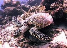 Zoo Liberec chrání mořské želvy v Indonésii
