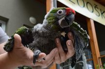 Ptačí babyboom v děčínské zoo