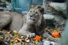 Podzimní zoo méně strašidelně