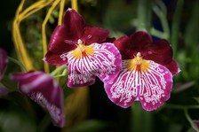 Trojská botanická zahrada připravuje výstavu orchidejí